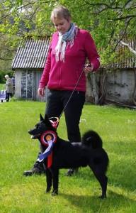Børvelias Leo, Cert Brukshundklasse . Eier Ingeborg Øyna
