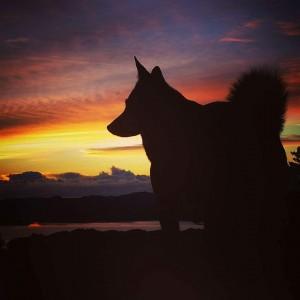 Ronja i solnedgang